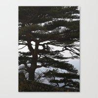 korean Canvas Prints featuring Korean Trees by Beth Purvis