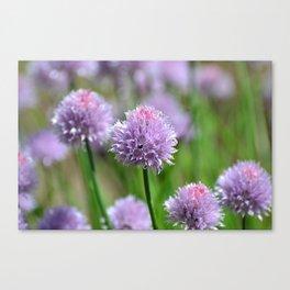 A subtle kick of Lavender.... Canvas Print