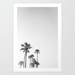 Black and White California Palms Art Print