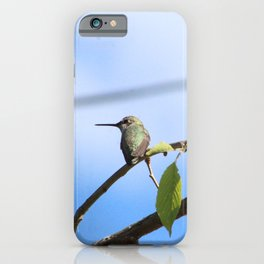 Blue Stellers Jay iPhone Case