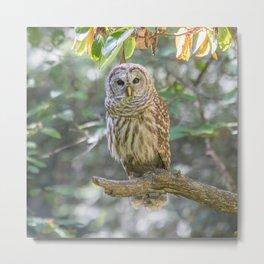 Barred Owl Dreams Metal Print