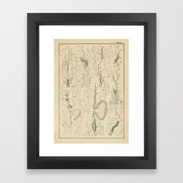 Microscopic Biology Framed Art Print