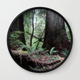 Coast Redwoods Rainforest 03 Wall Clock