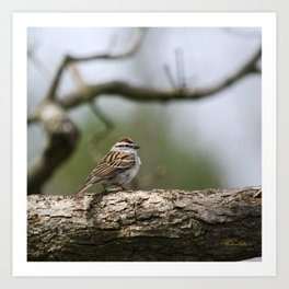 Sparrow in Tree Art Print