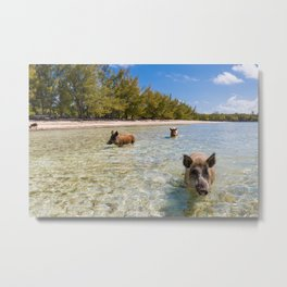 landscape with  pig in Bahamas Metal Print