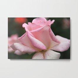 Rose Pink Metal Print