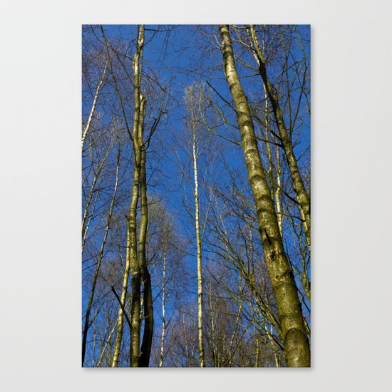 The Still forest Canvas Print