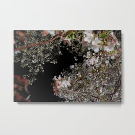 blossom by night Metal Print