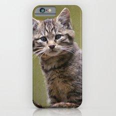 Scottish Wildcat Kitten iPhone 6s Slim Case