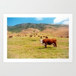 Mountain Bovine Art Print
