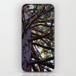 Exotic tree branches iPhone Skin