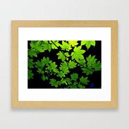 Maple Leaves  Framed Art Print