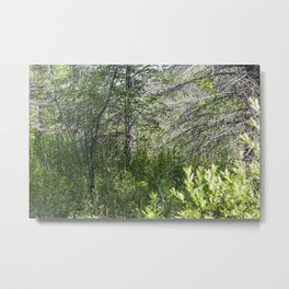 Summer Forest 5 Metal Print