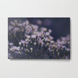 Dreamy daisies Metal Print