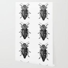 Beetle 11 Wallpaper