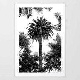 Tropical Darkroom #139 Art Print