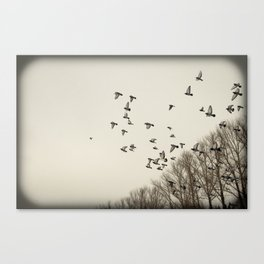 inhabitants of the sky-2 Canvas Print