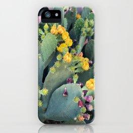 Cactus Blooms in Arizona iPhone Case