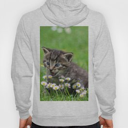 Kitty looking at flowers Hoody