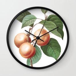 Apricot art of Nature, flower print, botanical illustration Wall Clock