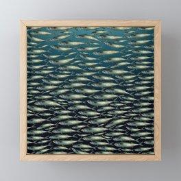 Mackerel At School. Framed Mini Art Print