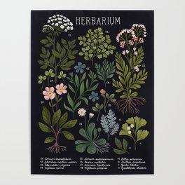 Herbarium ~ vintage inspired botanical art print ~ black Poster