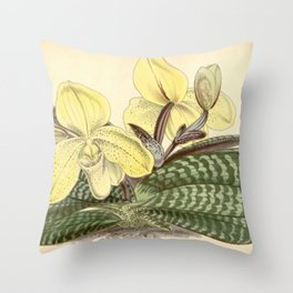 Paphiopedilum concolor Throw Pillow