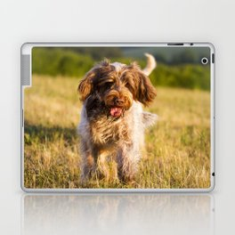 Brown Roan Italian Spinone Dog in Action Laptop & iPad Skin