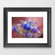 Apple buds  Framed Art Print