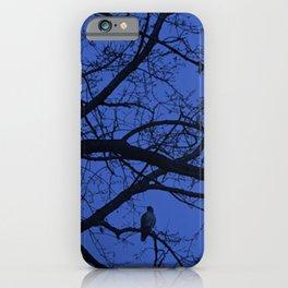 Hawk in Tree iPhone Case