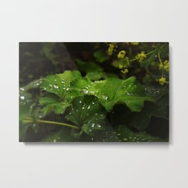 Shot with Dew Metal Print