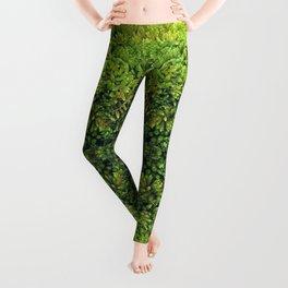 ~°* Tantalizing 《¤》 Mosswork°//*Textures *°~ Leggings