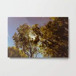 Forest Sun Metal Print