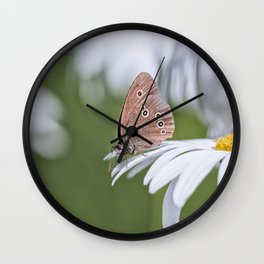 Butterfly on daisy Wall Clock