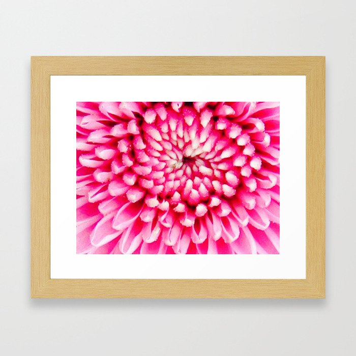 Cherry Pie Dahlia Framed Art Print
