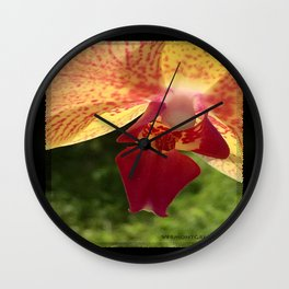 Yellow Orchid Flower Blossom from Mexico Wall Clock