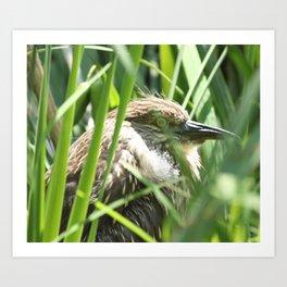 Hiding Bird Photography Print Art Print