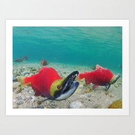 Red Fish, Blue Water Art Print