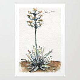 Century Plant (Agave) Art Print