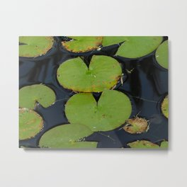 Lillypads in the pond Metal Print