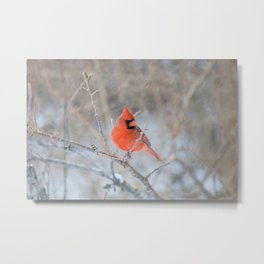 Hanging On (Northern Cardinal) Metal Print