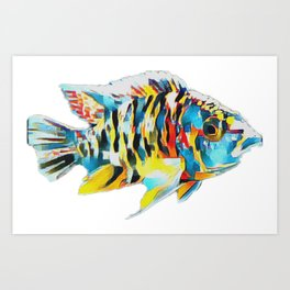 OB Peacock Cichlid Fish Art Print