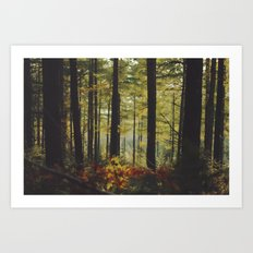 Autumn Wood Art Print