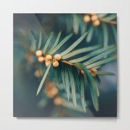 Pines. Metal Print