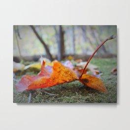 Autumn leafs Metal Print