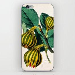 Fig plant, vintage illustration iPhone Skin