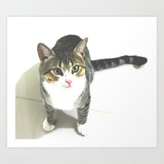 Miojo Cat. Art Print