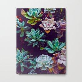 Colorful Succulent Cactus Plants Garden Metal Print
