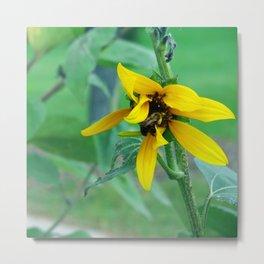 Bumble Bee Flower Metal Print