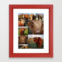 Highlander - Highland Cows - Highland Cattle Framed Art Print